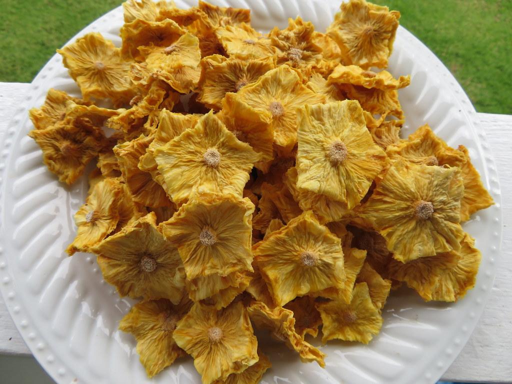 starr-190828-6880-Ananas_comosus-dried_fruit-Hawea_Pl_Olinda-Maui