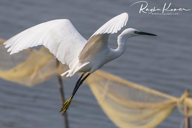 Muttukadu Backwaters, India