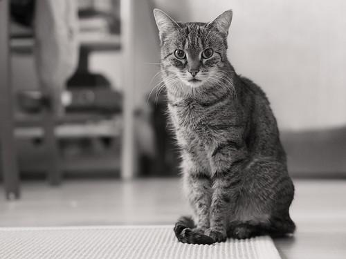 7e3_c221847bwo-early-sunday-morning-cat-portrait