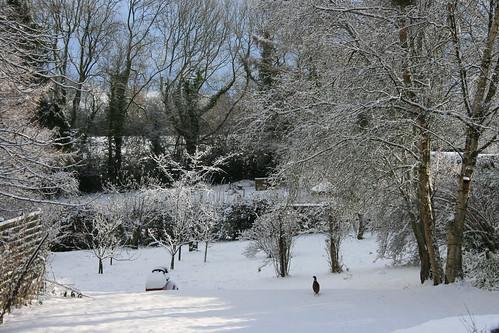 snow christmas 2010 endofthedecade pheasant snowlandscape snowpanorama snowscene garden wealden sussex