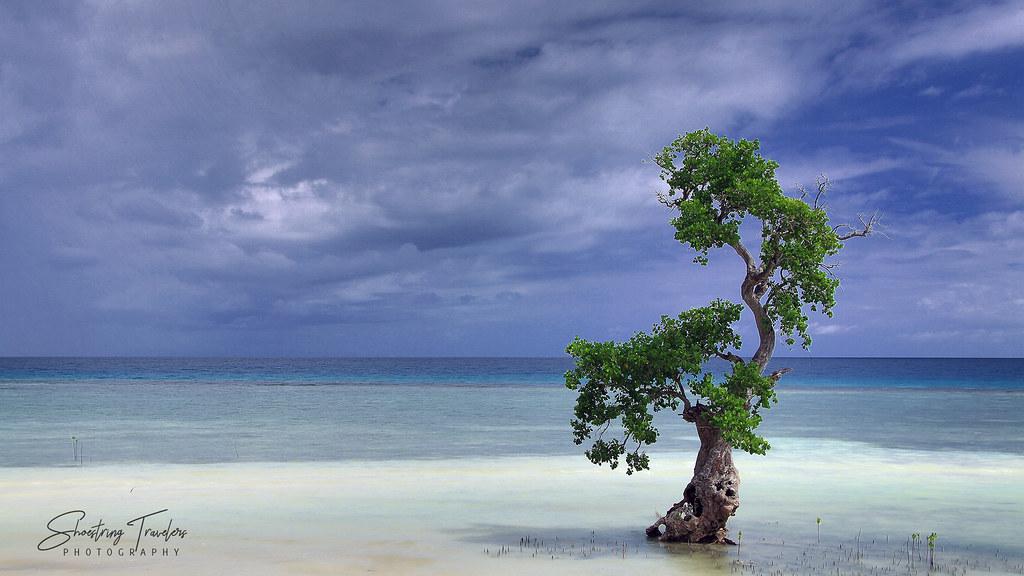 mangrove tree along the coast, Bino-ongan, Enrique Villanueva