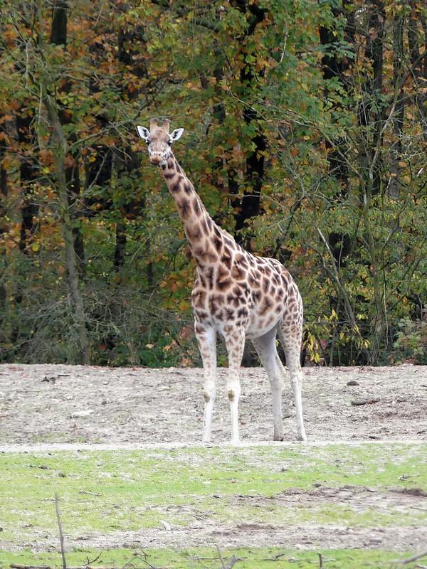 Burgers Zoo Arnheim