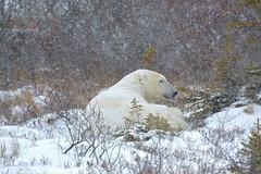 Waking a Bear