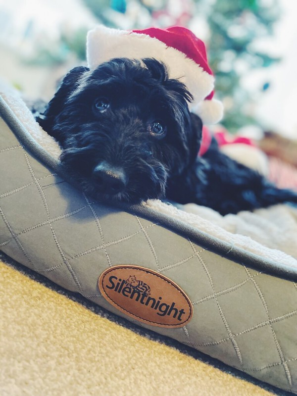 Silentnight dog bed - Beau