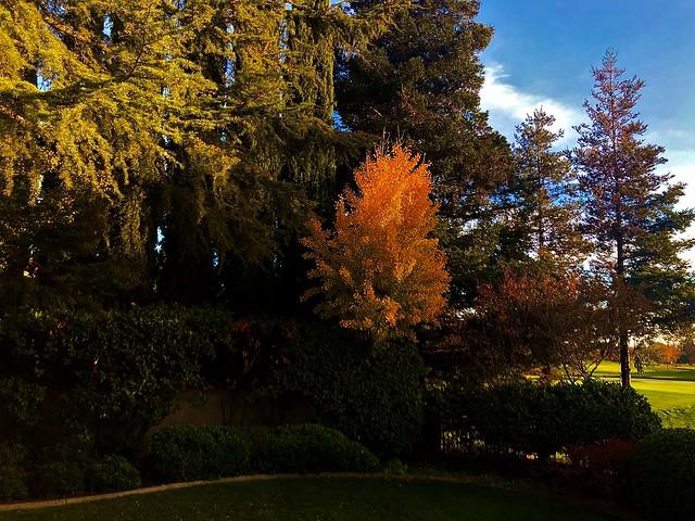 Last Few Moments of Autumn