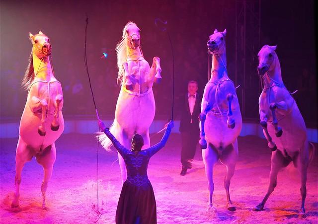 Great Christmas Circus Carl Busch 2019 - Frankfurt am Main, Germany in Dec. 2019 - Natascha Wille-Busch and her Arabian Horses