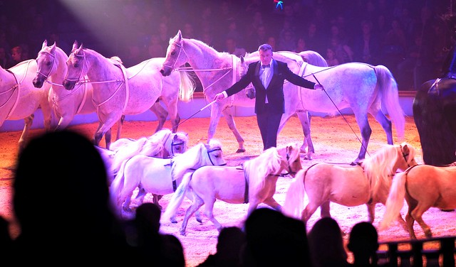 Horse Show during the Great Christmas Circus Carl Busch in Frankfurt am Main, Germany - Dec. 2019