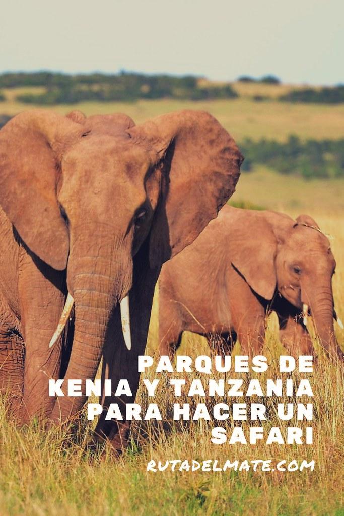 Parques de Kenia y Tanzania para hacer un safari