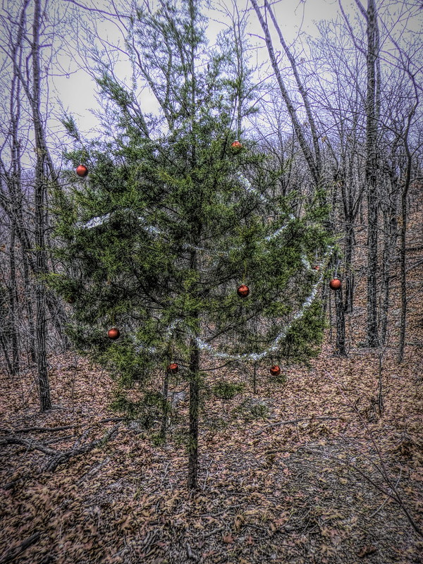 Turkey Mountain Christmas Tree