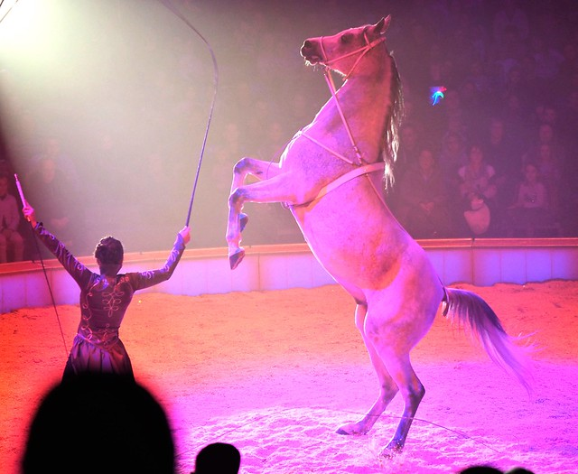 Horse Show in Frankfurt am Main, Germany - during the Great Christmas Circus Carl Busch - Dec. 2019