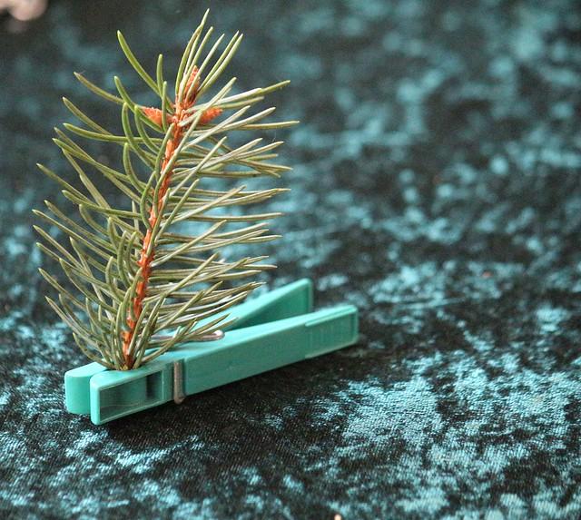 Mein Baum steht.
