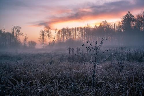 landscape nature mazovia poland autumn morning sunrise dawn hoarfrost frost flora grass trees clouds fog sky