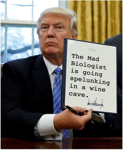Trump_spelunkingwinecave