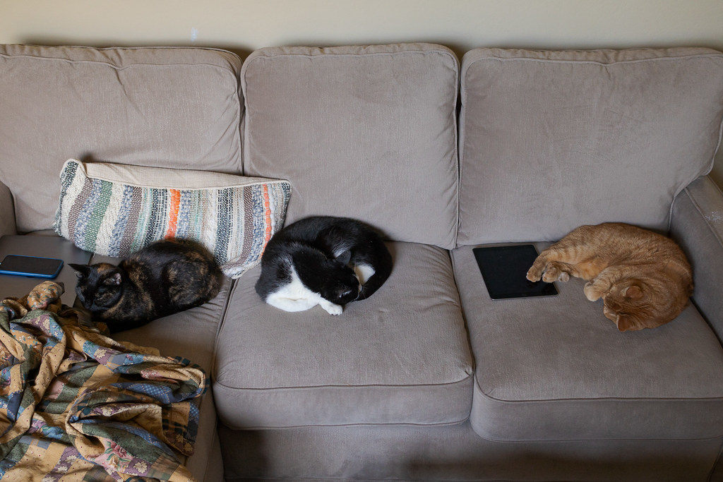 Our cats Trixie, Boo, and Sam sleep on my couch next to my MacBook Pro, iPhone, and iPad in December 2019