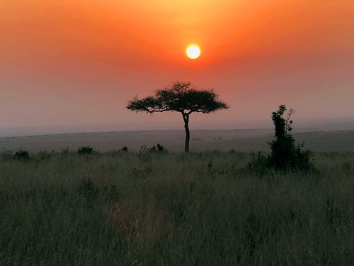 sunset plains grass grasses grasslands kenya ke africa africansafari orange yellow sun mara masaimara acacia scrub shrub silhouette jennypansing landscape iphone tree acaciatree horizon