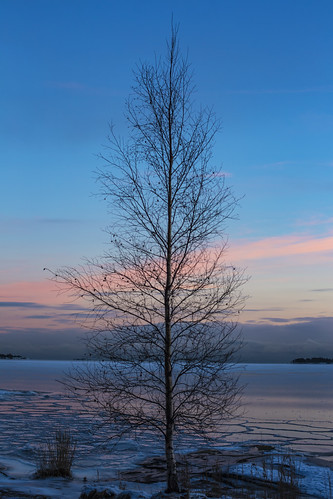 canon6d sunset landscape tree silhouette nature outside outdoors espoo finland sky clouds