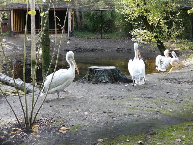 AquaZoo, Leeuwarden