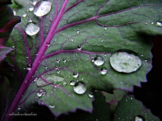 Hojas lluvia 001