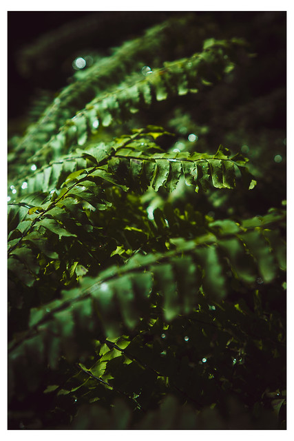 Deep Forest - Jenkintown Arboretum - Jenkintown PA_Web 1-E_Scaled