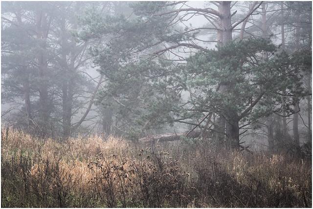 silent december morning
