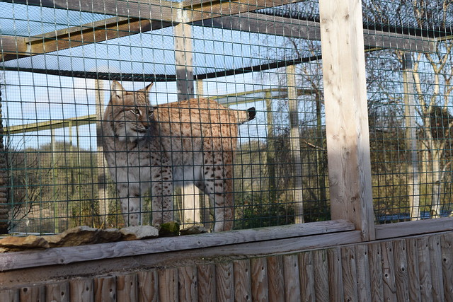Mablethorpe Seal Sanctuary and Wildlife Centre