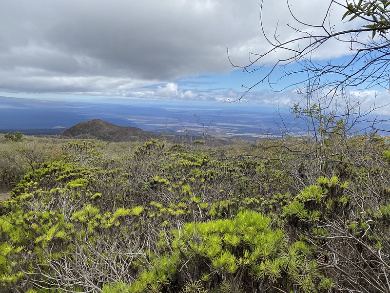 The trail to Chico Volcano at 980 meters (3,215 ft) above sea level, Isla Isabela (Albemarle), the Galápagos Islands, Ecuador.