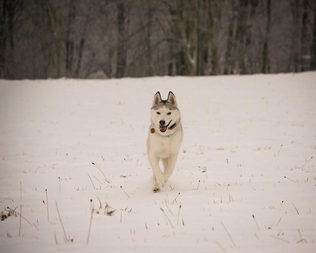 20191215 Snow Gallops_14