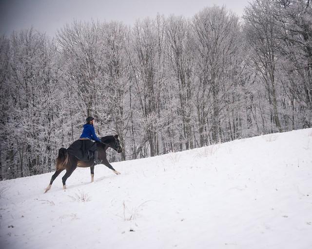 20191215 Snow Gallops_117