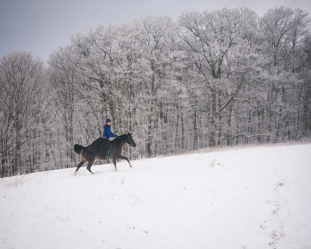 20191215 Snow Gallops_139