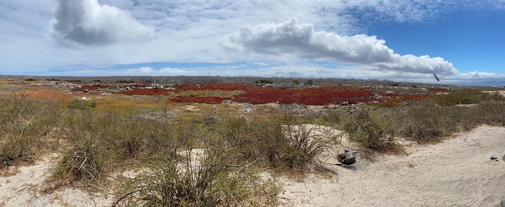 The Blue-footed Boobies, North Seymour Island, the Galápagos Islands, Ecuador.