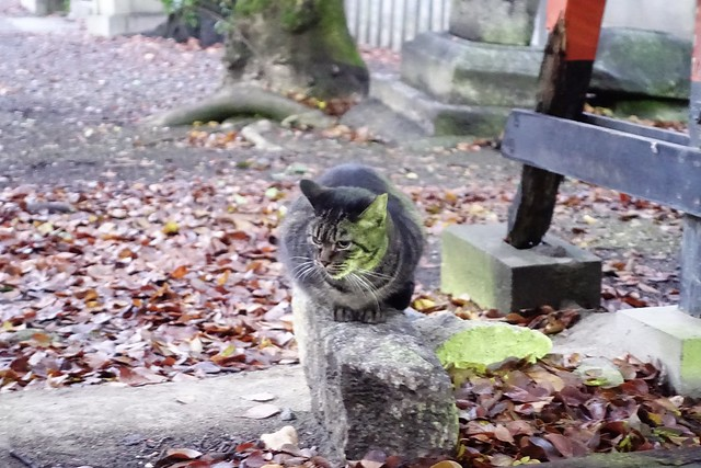 Today's Cat@2019-12-23