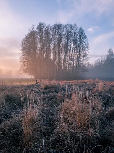 landscape nature mazovia poland autumn morning sunrise dawn frost hoarfrost flora grass trees