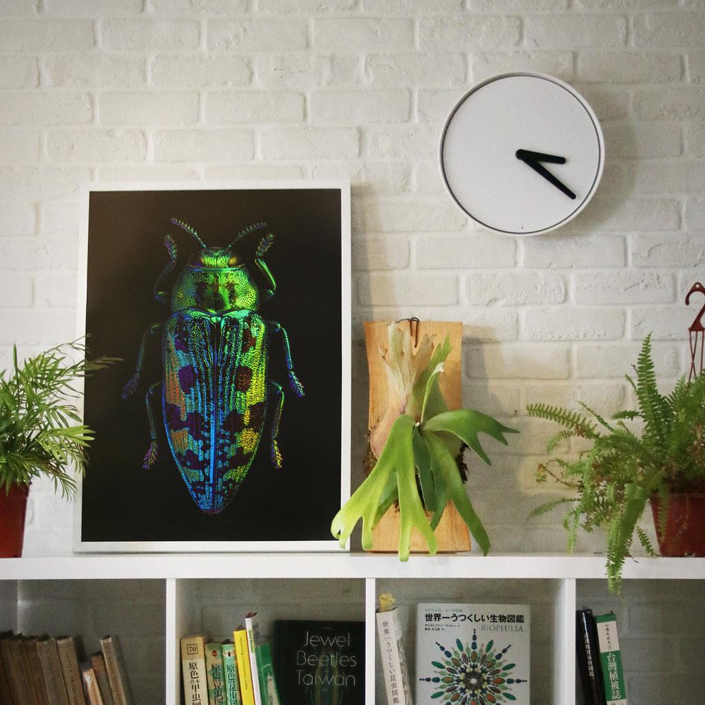 《台灣吉丁蟲圖鑑》跳脫傳統昆蟲圖鑑概念,用美傳遞知識
