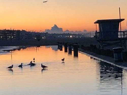 venice venicebeach beach water ocean sunrise clouds seagulls birds reflect reflections california iphone