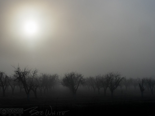 california norcal yubacounty commute sunrise trees fog grove
