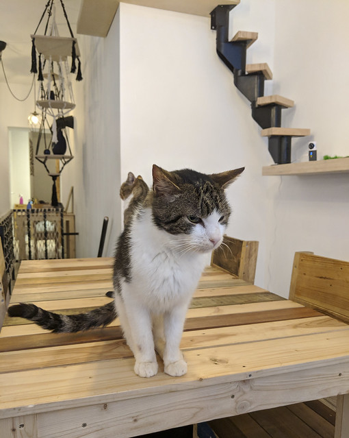 Cat Cafe - Miss Miaouw, Nanur