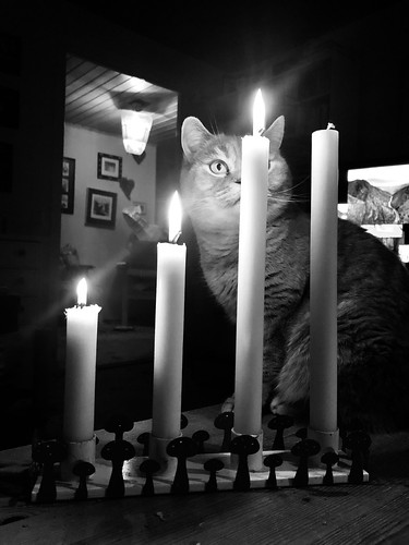 advent 4, 2019 - vegan candles and snoopervisor Ågot (aka li'l miss feline arsonist II)