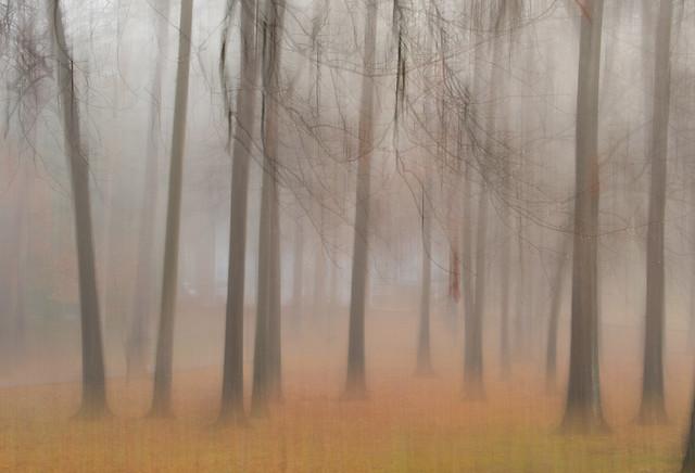 A Foggy Dream