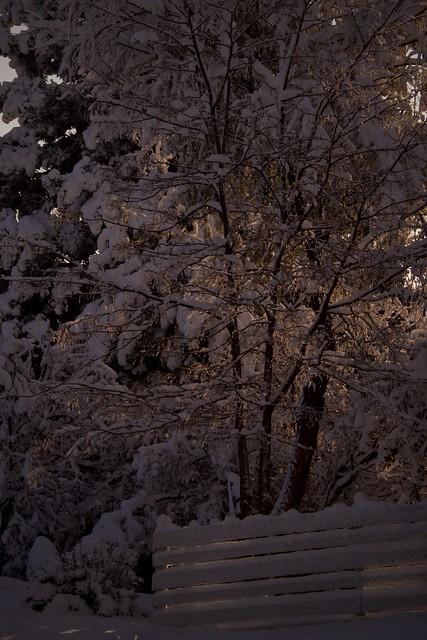 Fresh Snow at Dawn