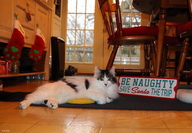 Be Naughty... Save Santa The Trip