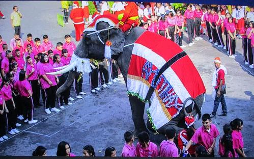 santa elephant