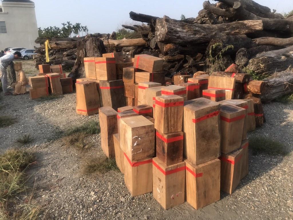 查扣盜伐50噸珍貴林木