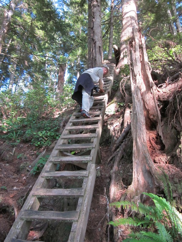 We climbed on several ladders for over 200 feet in height on this first section of the WCT near Pachena Bay