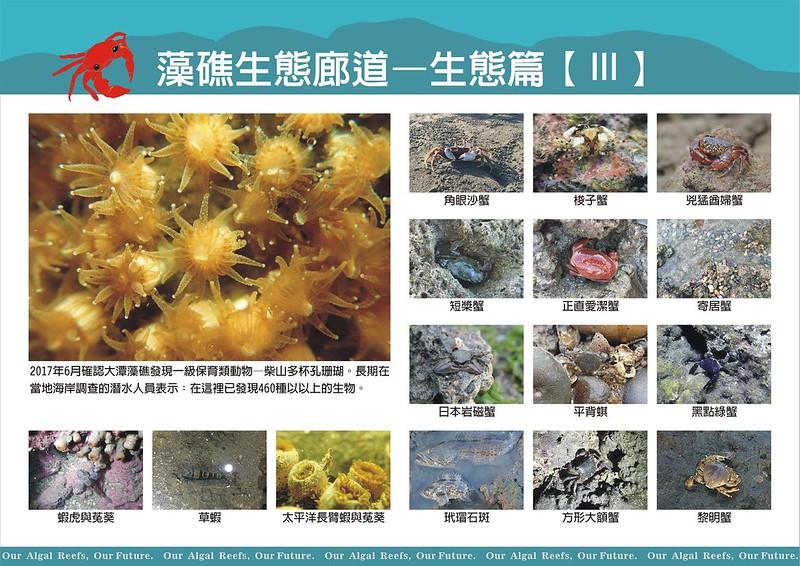 生活在藻礁地帶的多樣生物。圖/程美玲提供