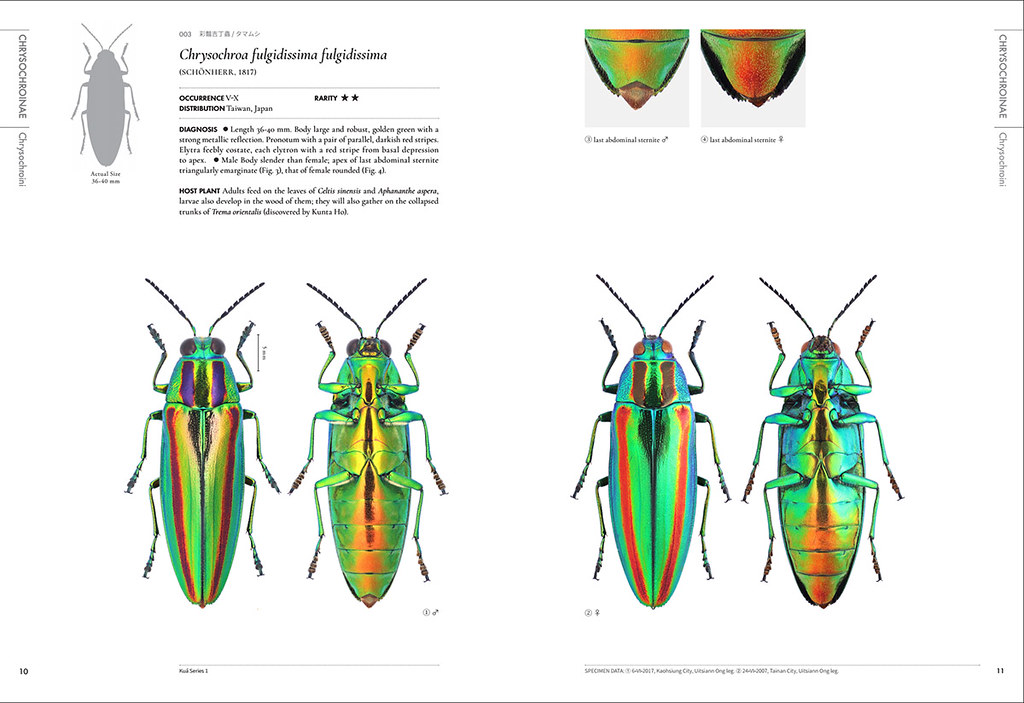 昆蟲圖鑑《台灣吉丁蟲圖鑑》的內頁
