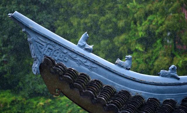 Shanghai - Rainy Roof