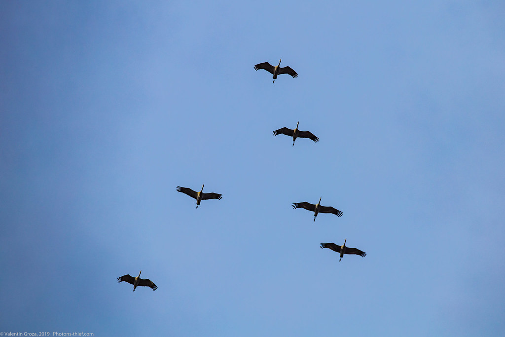 Denali NP 231 sandhill cranes 01 med