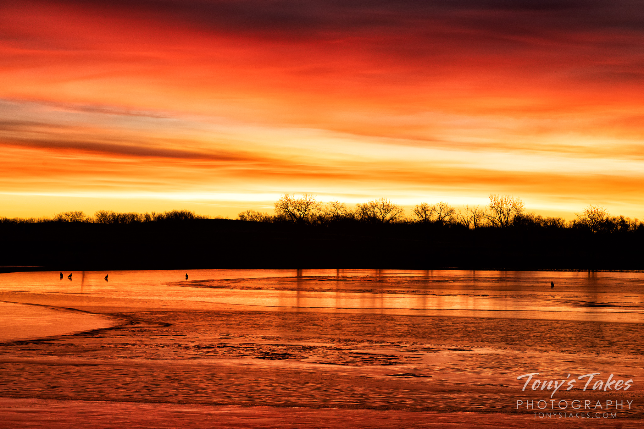 Bald eagles hang out on the ice during a beautiful sunrise on the plains. (© Tony's Takes)