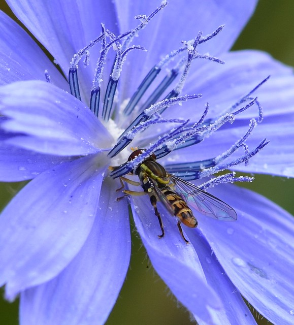 Insect on a flower