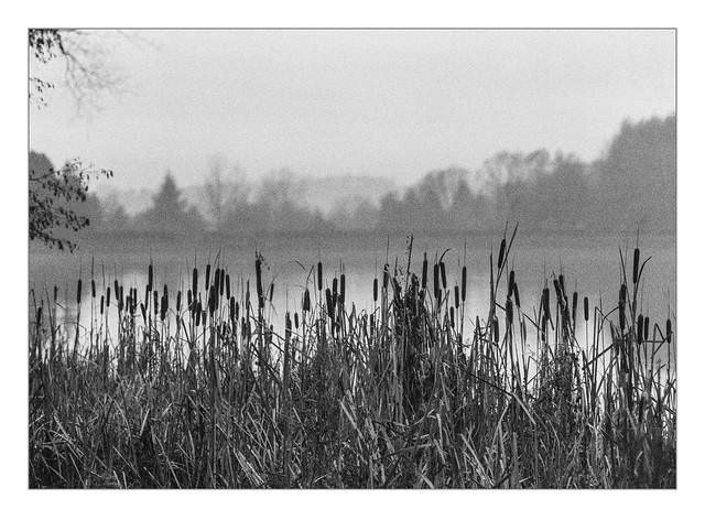 Foggy morning at Lake Kell